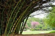 Bambu - do plantio ao armazenamento