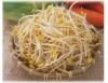 Brotos podem ser produzidos em cozinhas ou galpões