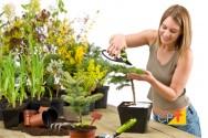 Conheça 4 plantas que purificam o ar de ambientes fechados