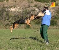 Jovem ou adulto - quando treinar um cão de guarda?