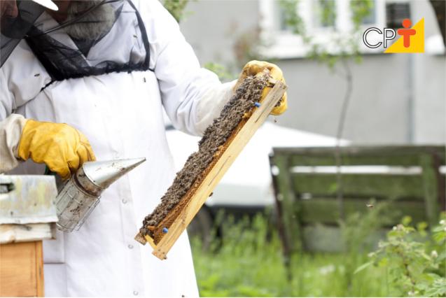 Comercialização de mel