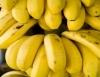 Produção de banana é bom negócio para pequenos, médios e grandes produtores