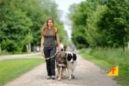 Dog walkers ganham as praças e jardins das cidades