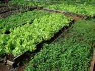 Uma maneira de obter plantas mais resistentes é a utilização de sementes ou mudas produzidas no próprio local.