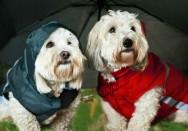 Produtos de pet shop invadem o mercado