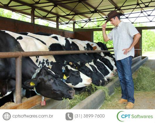Cálculo em app avalia impacto ambiental por gado leiteiro
