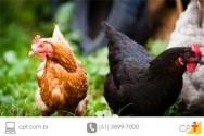 Saiba como tratar aves com sarna