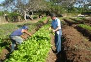 Para obter produtos o ano todo, é preciso fazer um planejamento de plantio, observando a época de cultivo de cada espécie.