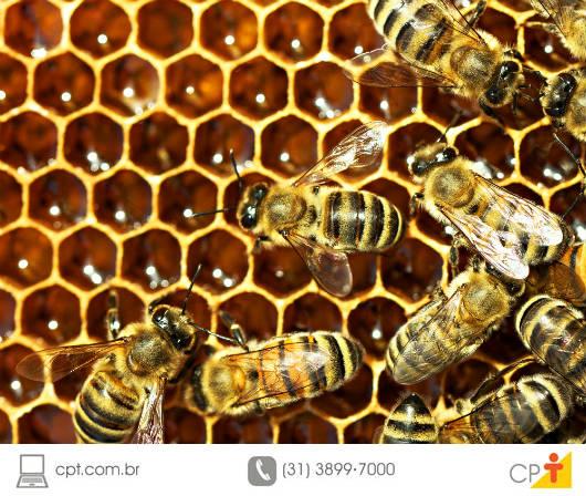 Colheita de mel no Sergipe