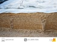 4 dicas para produzir boa silagem de milho