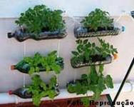 Decoração saudável: aprenda a fazer uma horta vertical, prática e que dá vida à sua casa