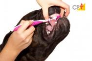 Quando escovar os dentes de cães e gatos?