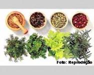 Plantas que curam: conheça os benefícios das terapias com plantas medicinais