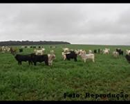 Você sabe como deve ser feito o cuidado sanitário na produção de carne?