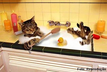 higiente dos aminais