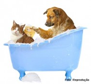 Você sabia que a higiene dos animais é tão importante quanto a dos seres humanos?