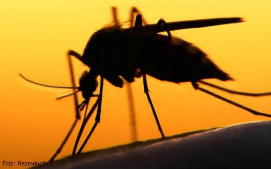 Por que os mosquitos picam mais umas pessoas que outras?