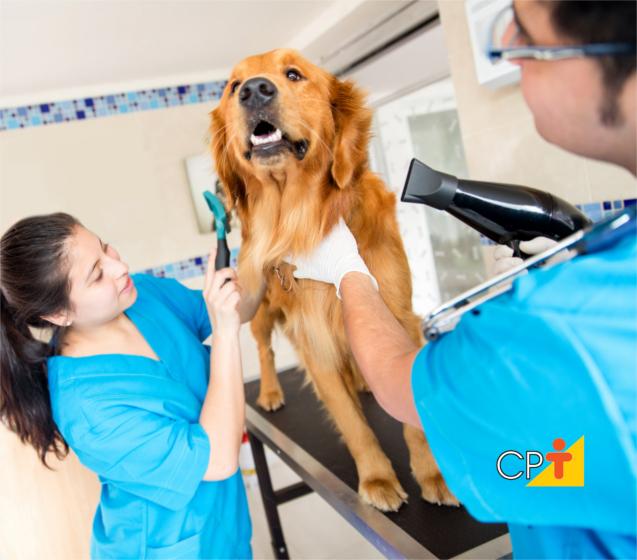 Banho e tosa em cães e gatos