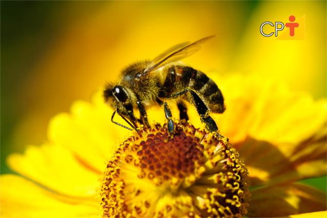 Abelhas porque precisar delas