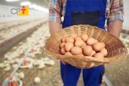 Consulta pública do MAPA para produção de mel e ovos continua aberta