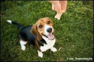 Seu cachorro se comporta mal? Veja dicas de adestramento para dar fim a esse problema.