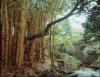 Esgoto pode ser tratado com bambu