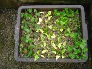 A propagação das plantas apresenta segredos e detalhes importantes que precisam ser conhecidos por quem se aventura na área de produção de mudas.