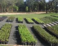 Mudas de qualidade são de fundamental importância para o sucesso na implantação e manutenção de qualquer projeto paisagístico, arborização urbana ou mesmo para o cultivo de plantas em vaso.
