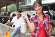 Programa Leite Saudável beneficia 7 mil produtores de leite