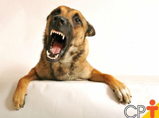 Medidas educativas para cães - Artigos CPT