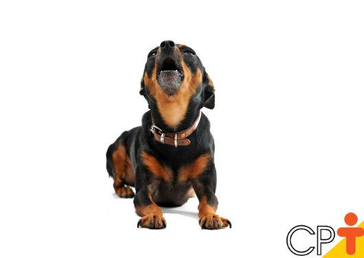 Por que os cães latem? Como corrigir os excessos? - Artigos CPT