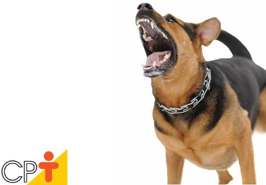 Meu cão late muito. Como corrigir o excesso? - Artigos CPT