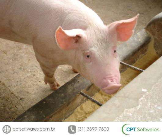 Benefícios do software para gerenciamento de granjas de suínos