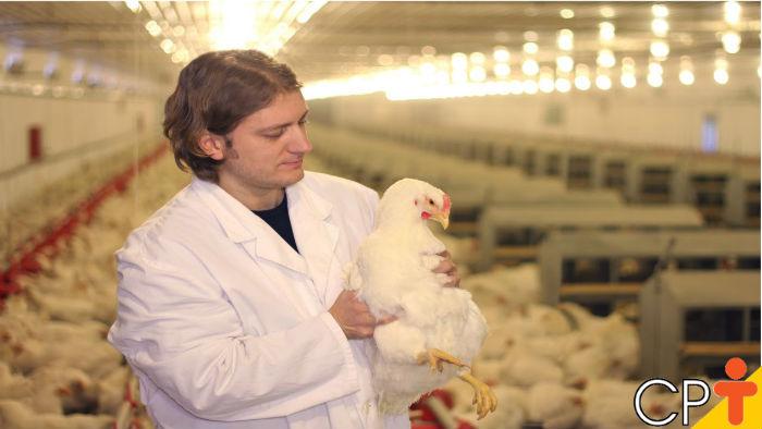 Raça ou linhagem: como classificar os frangos? - Artigos CPT