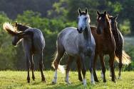 Está pensando em comprar cavalos? Veja essas dicas e saiba o melhor modo de adquiri-los
