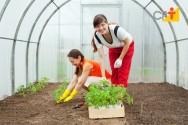 Agroturismo: gestão e planejamento são as chaves para o sucesso