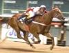 Cavalos Quarto de Milha apresentam habilidade em esportes e atividade rurais