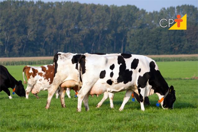 Melhoramento gado de leite