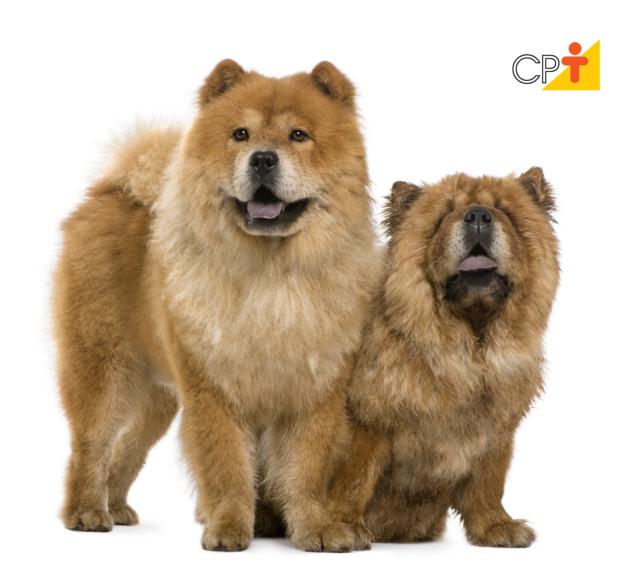 Como os cães enxergam