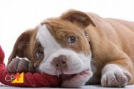 Filhotes de cães: principais cuidados nos primeiros dias de vida