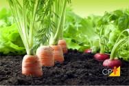 Agricultora de Nova Friburgo ensina como produzir cenouras retas