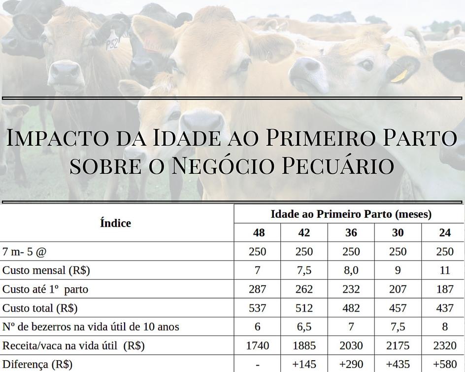Tabela Impacto da idade ao primeiro parto sobre o negócio pecuário - Artigos Cursos CPT