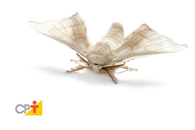 Criação de bicho-da-seda
