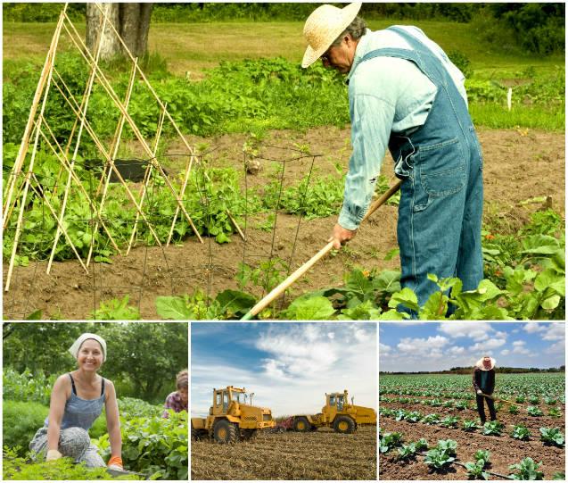 A importância de se comemorar o Dia do Agricultor | Notícias ...