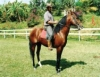 O que avaliar na compra de cavalos