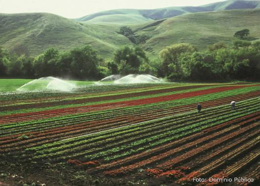 Irrigação evita perdas na lavoura e mantém produtividade