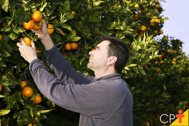 Recomendações do uso da calda bordalesa em pomar - Artigos Cursos CPT