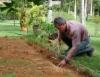Correção do solo eficaz tem a participação de macro e micronutrientes