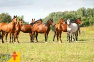 Como deve ser a alimentação dos cavalos?