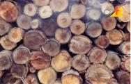 O que faz a madeira de eucalipto apodrecer?